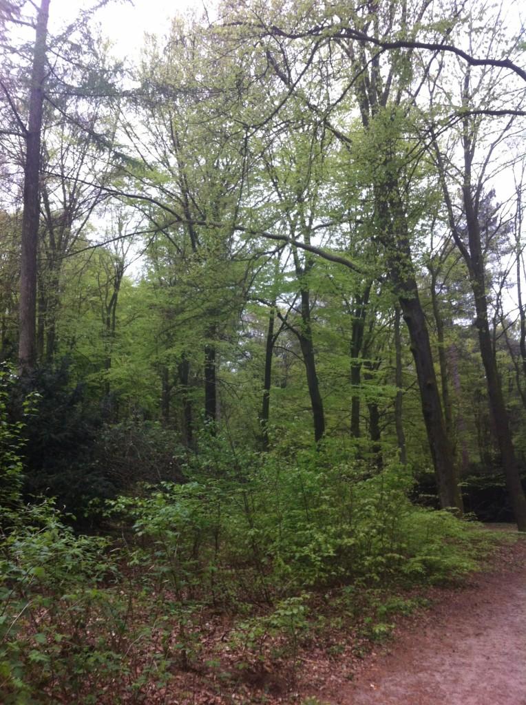 hardlopen bos