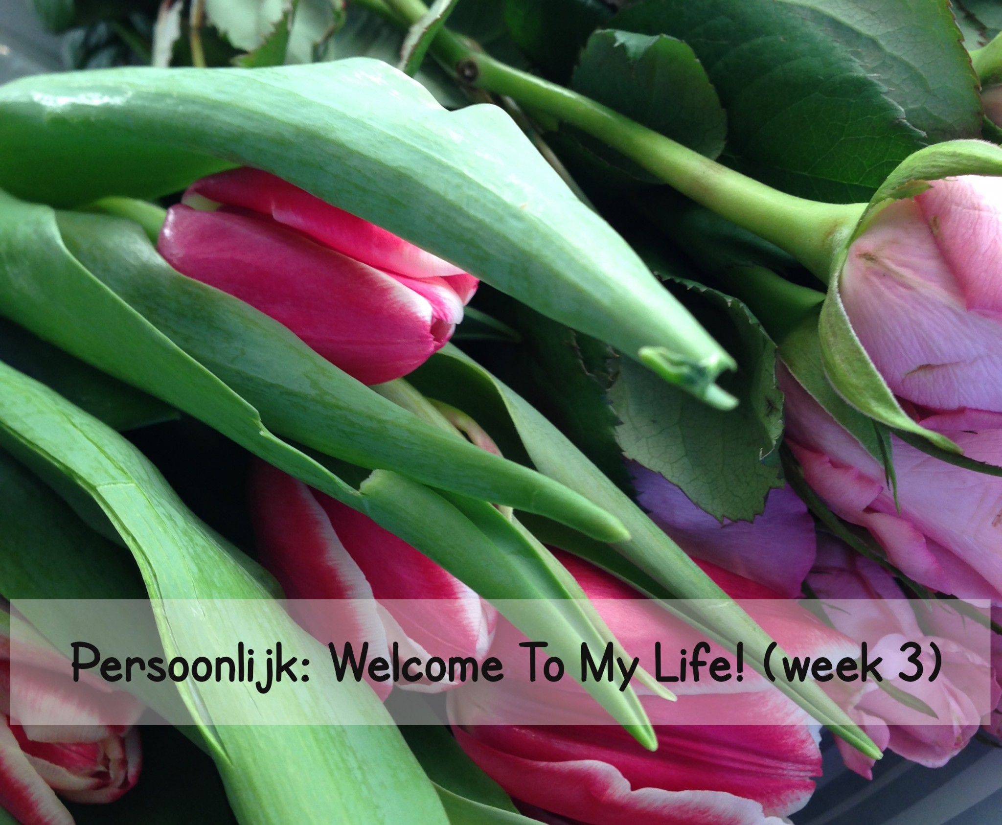 Persoonlijk: Welcome To My Life! (week 3)