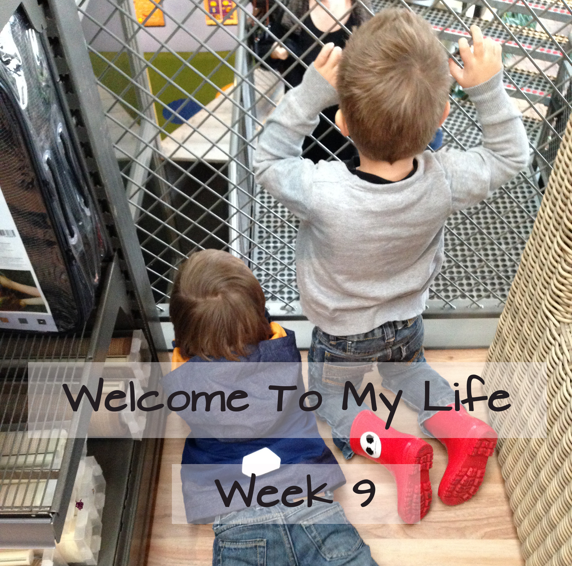 Persoonlijk: Welcome To My Life (week 9)