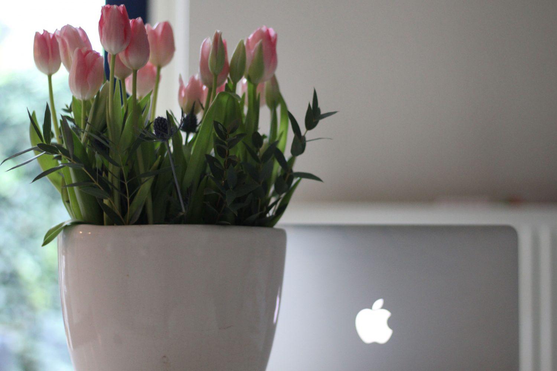 Bloggen: hoe kreeg jij snel veel volgers?