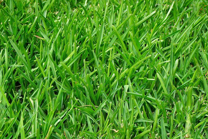 grasvlekken